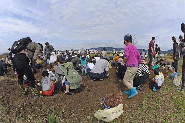 芋掘り大会 (29)