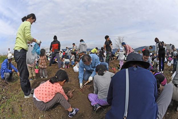 芋掘り大会 (30)