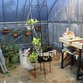 温室整備中 (2)