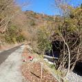 渓流沿いの道