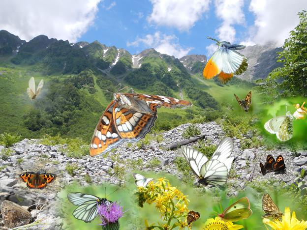 夢想4─中部の高山蝶