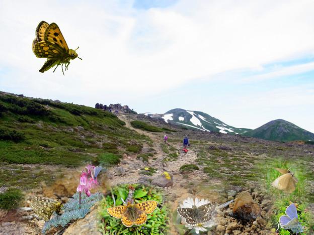 夢想5─北海道の高山蝶