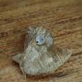 テツイロビロウドセセリ卵