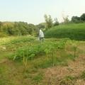 家の畑 (1)