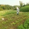 家の畑 (2)
