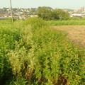 家の畑 (3)
