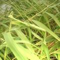 葦の造形物(新川) (7)