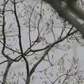 大阪城探鳥(2019/03/30)