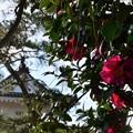 Photos: 花簪と櫓