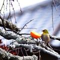 Photos: No3小鳥