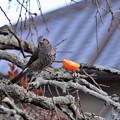 Photos: No4 小鳥