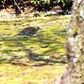 Photos: NO6の小鳥