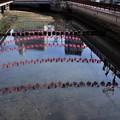 Photos: 銅座川
