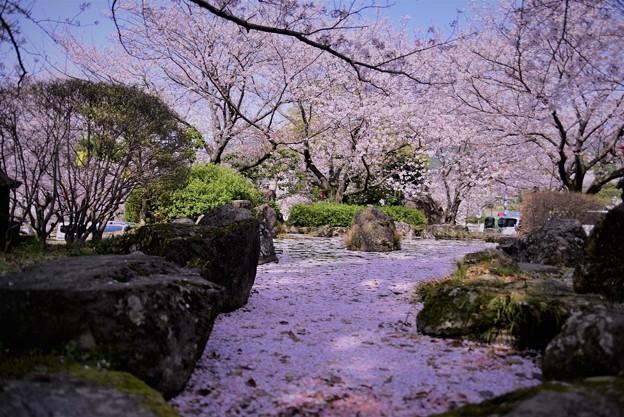 Photos: 花筏