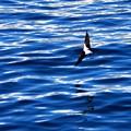 写真: ツバメ