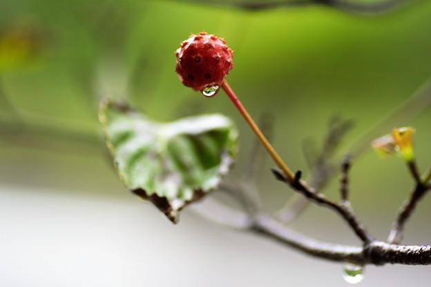 写真: 秋の雨