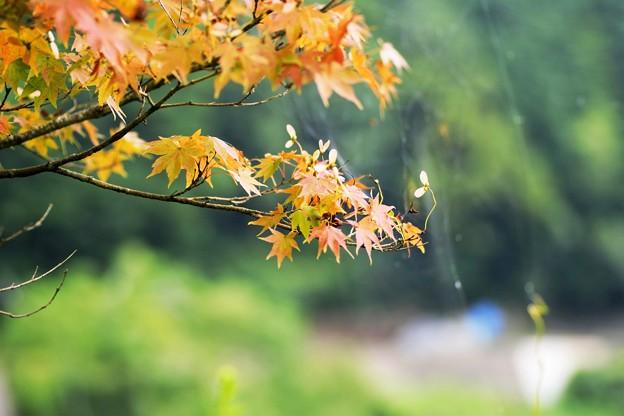 Photos: 急ぎ足