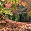 写真: 竹と紅葉