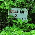 Photos: 放送日