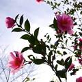 写真: 春、もうすぐ