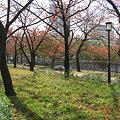Photos: 秋のお散歩。。
