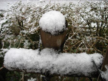 祝!初!積雪!