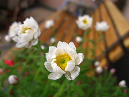 ベンチに腰掛ける花かんざし♪