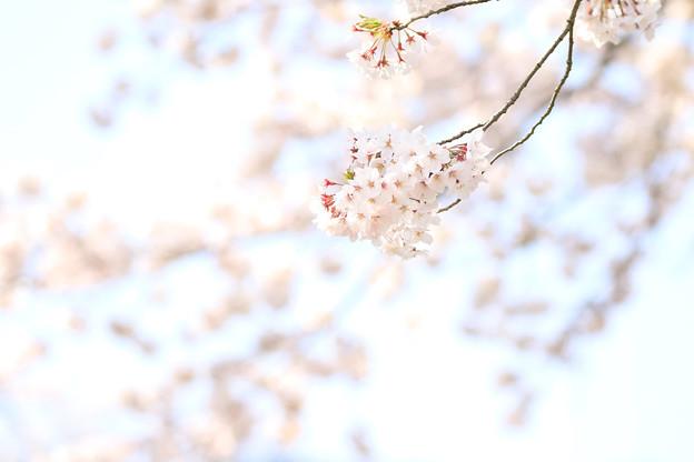 枝に咲く花