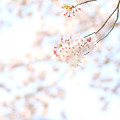 Photos: 枝に咲く花