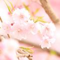 Photos: 春の花景