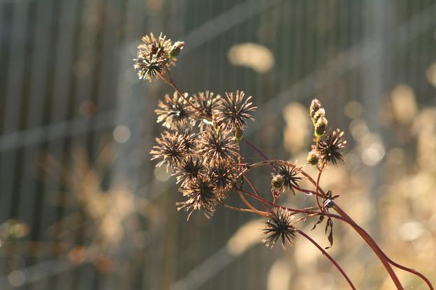 ある秋の情景