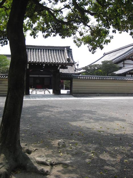 村崎一徳_京都東寺2951