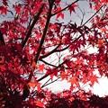 Photos: 紅葉・・・♪
