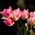 写真: 花束をキミに