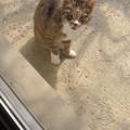 写真: そういえば今日スタジオで遭遇した猫ちゃん。