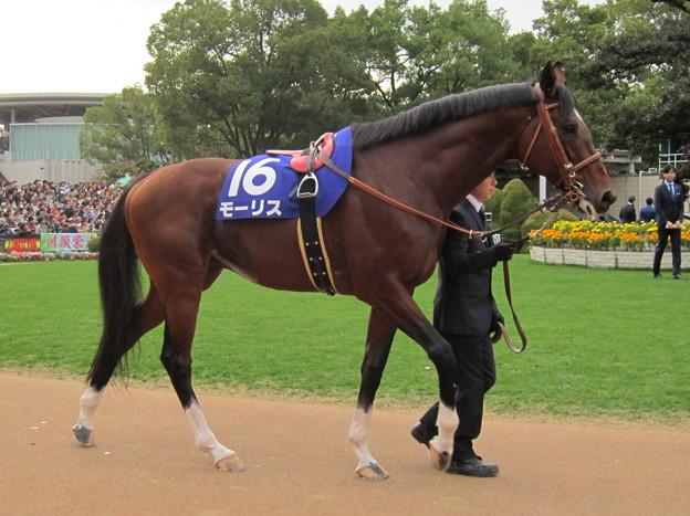 モーリス 完調でなくともこの馬体