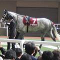 よく見るとやはり大柄な馬体