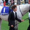 かなり白っぽくなってきた馬体