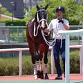 写真: ジャミールフエルテ 2018年最初の新馬戦勝ち馬のご登場