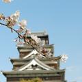 Photos: *広島城と桜*