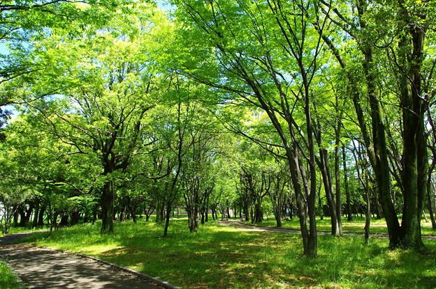 写真: 静かな五月の森