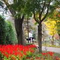 Photos: 夕焼小焼の赤と黄 Rouge et Jaune au Jardin Hureainosato de Hachioji dans Tokyo