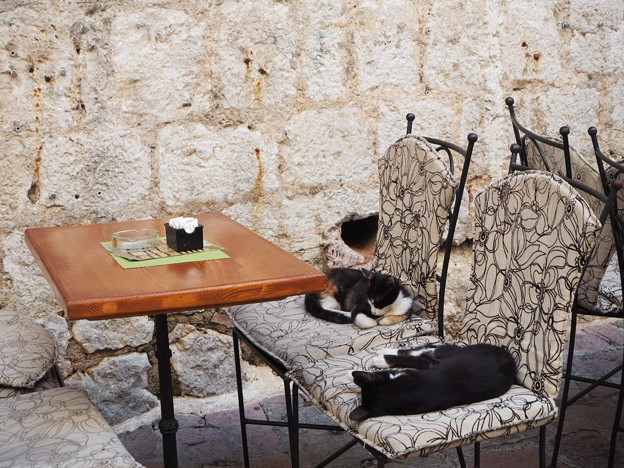 真のネコカフェ Cat cafe in Montenegro