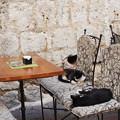 写真: 真のネコカフェ Cat cafe in Montenegro