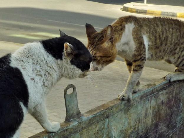 「逆毛立猫喧嘩屏風」~毛逆たち唸る Street Fighting in UAE