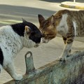写真: 「逆毛立猫喧嘩屏風」~毛逆たち唸る Street Fighting in UAE