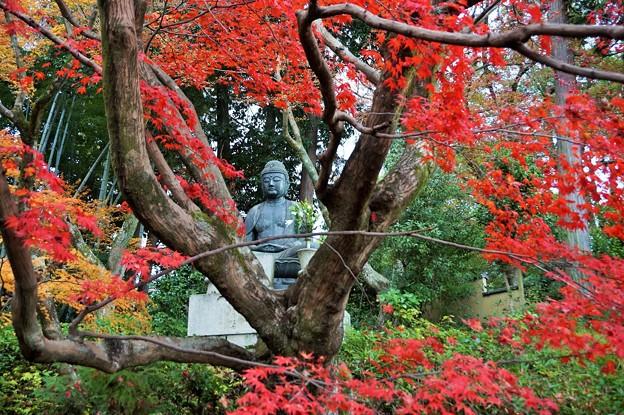 紅葉如来~京都栄摂院 Amitābha statue