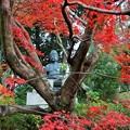 写真: 紅葉如来~京都栄摂院 Amitābha statue