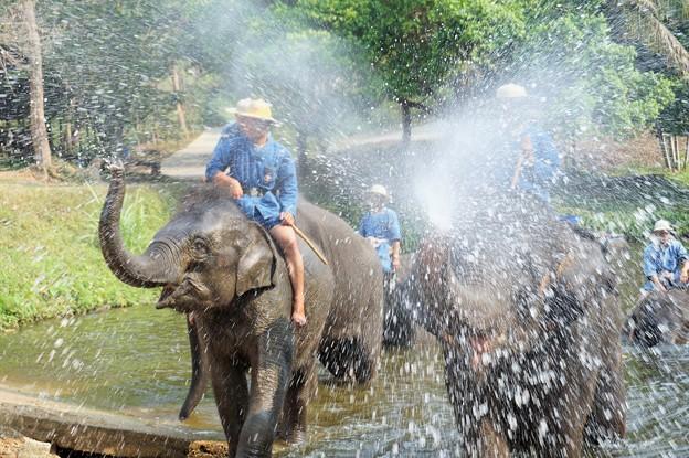 NBT速報:象から転落して日本人負傷~タイ Elephant Shower