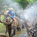 Photos: NBT速報:象から転落して日本人負傷~タイ Elephant Shower